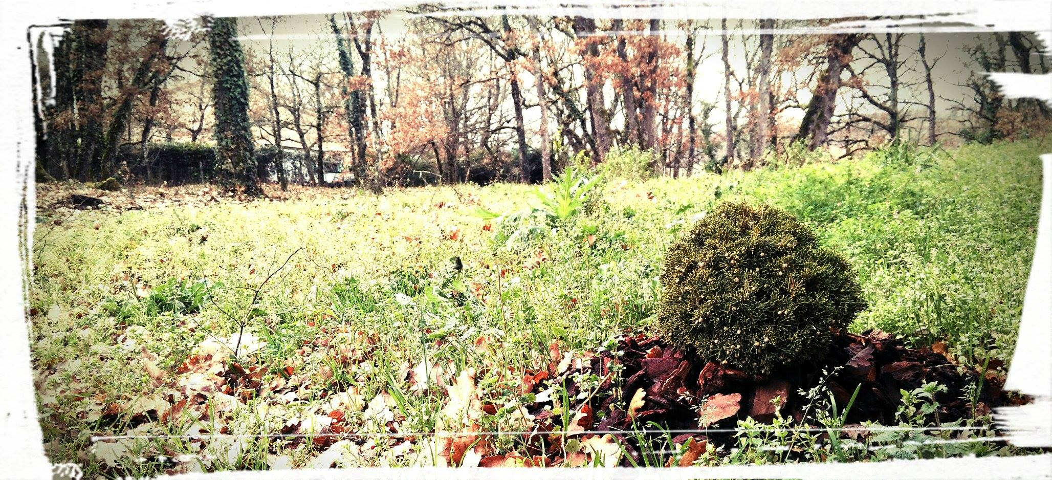 Jardins et bonsaîs chez Hosomi Ryokan